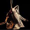 tissue act acrobatisch optreden