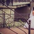trouwfotografie bruidspaar brug