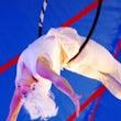 acrobatiek act huren bedrijfsfeest